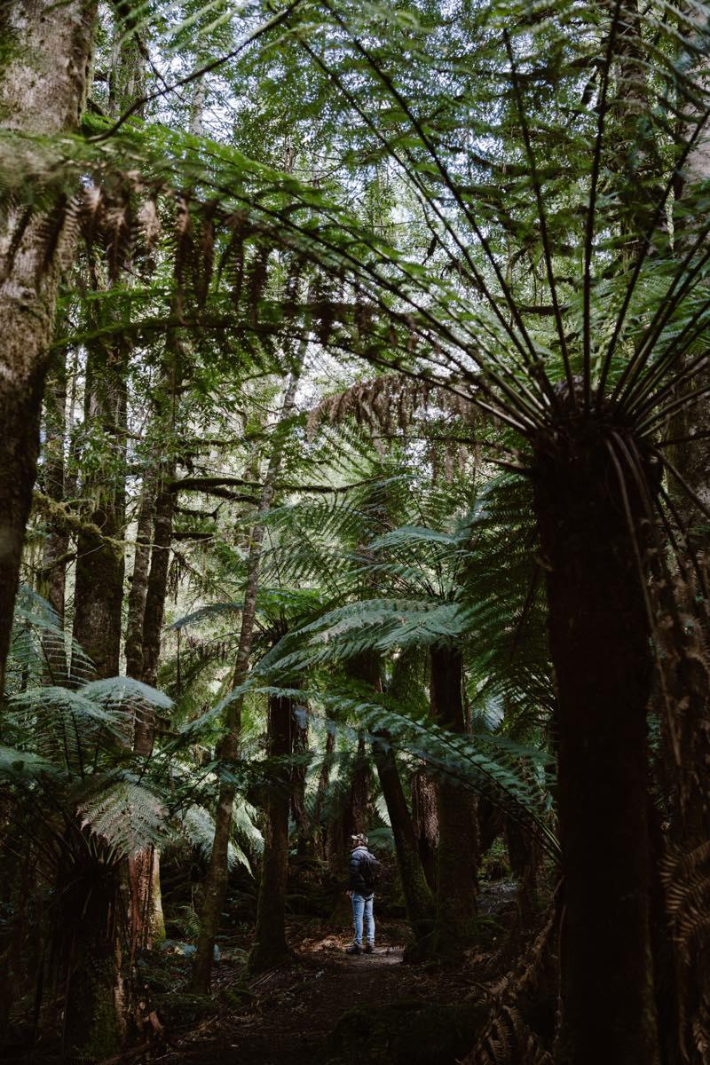 TasmaniaTravel0005