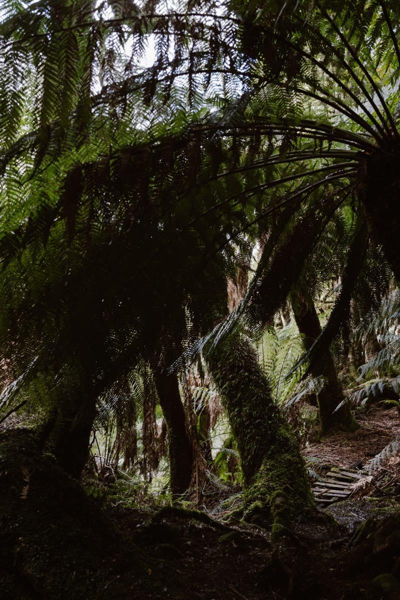 TasmaniaTravel0006
